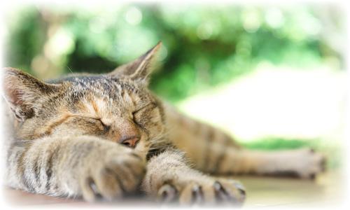dry_cat